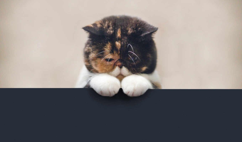 кот, обиженный, кота, очень, fab, выглядит,