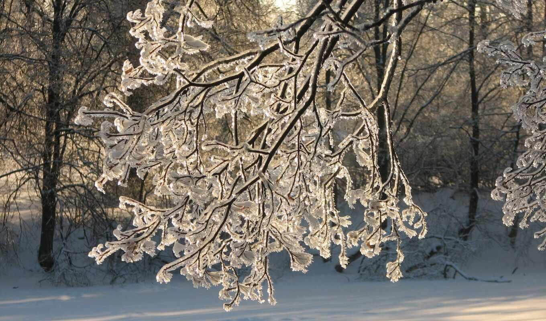 winter, natural, landscape, branch
