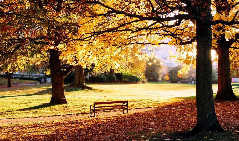 осень, скамейка, парк, природа, листья, деревья,