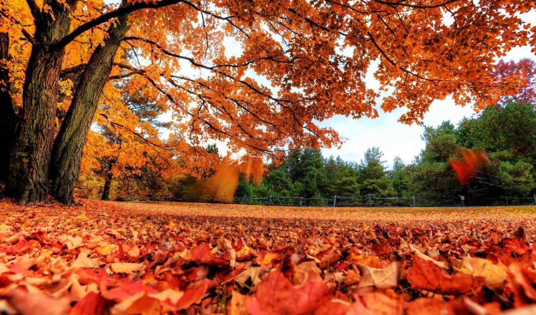 осень, лист, funart, дерево