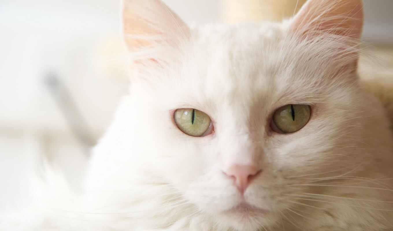 кот, white, dream, mean