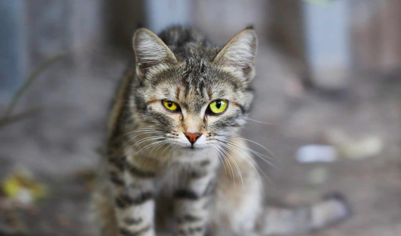 взгляд, кот, глаз, трава, зелёный, russian, left, black, котенок