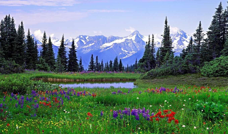 nature, речной, изгиб, lovely, din, цветы, harmony, desktop, луга, mountains, scenery, columbia, este, floare, british, alpine, rocky, wildflowers, деревья, martie, pe, facebook, daruiesc, горы, fieca