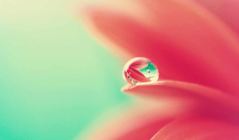 water, flower, drops, flowers, droplets, download, рулоны,