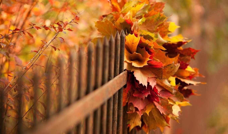 ,забор,листья,осень,букет,