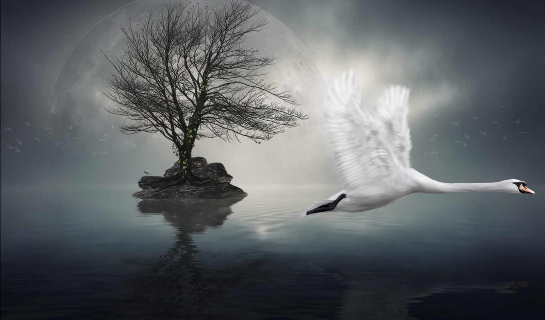 лебедь, космос, графика, нравится, крылья,