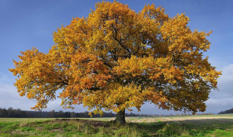 осень, windows, тема, sweden, swedish, images, free,
