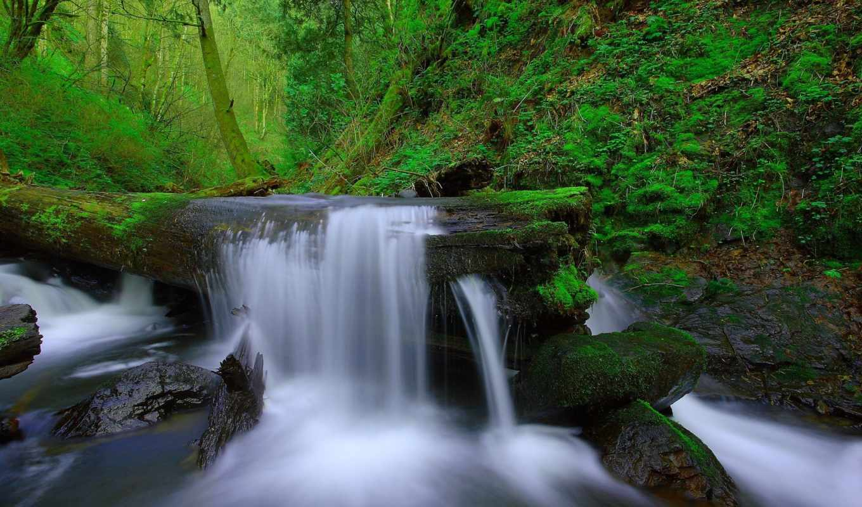 природа, природы, лес, пейзажи -, красавица, waterfalls, trees,