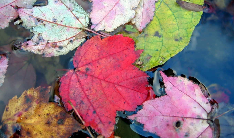 обои, осень, обоев, лето, качественные, коллекция,