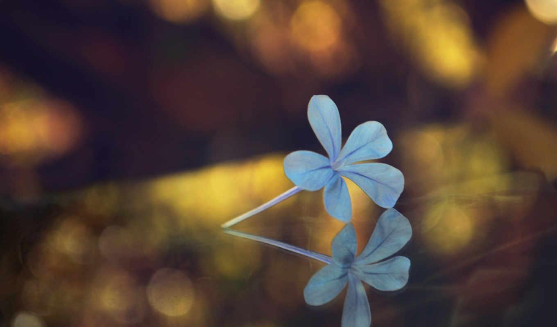 свет, цветы, блики, petals, макро, sun,