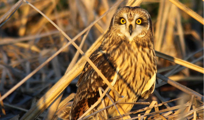 are, птица, сова, animals, трава, resolution, possible, pixels,
