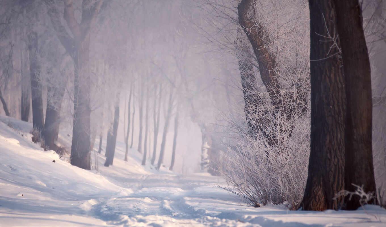 winter, заставка, дорогой, лес, туман, красивый, февраль, снег, fore