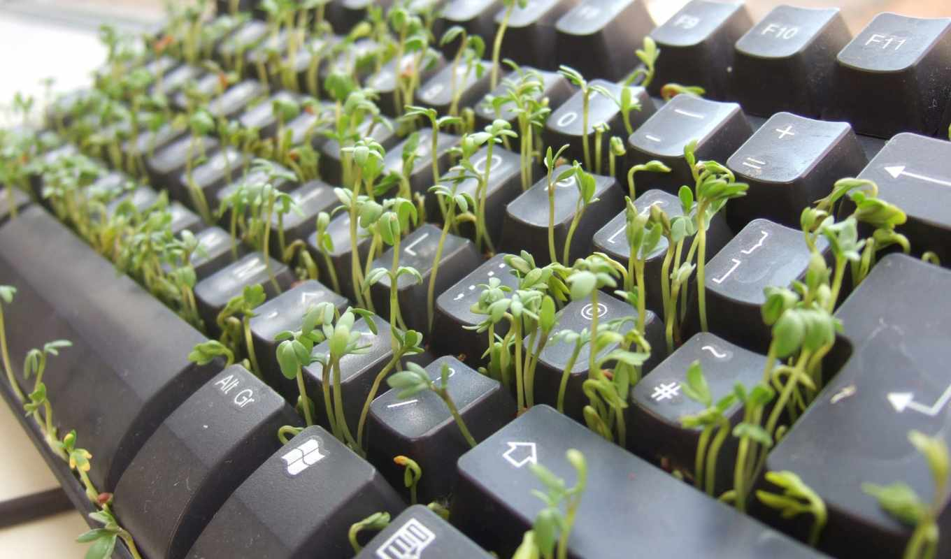 plants, keyboard, sprouts, funny