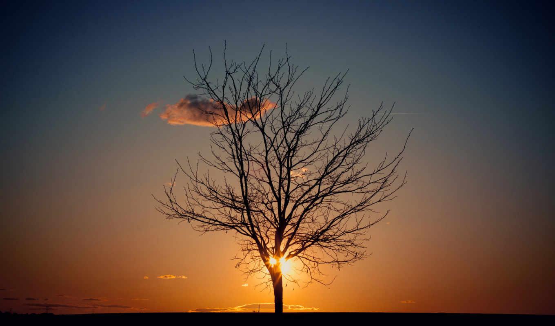 солнце, небо, вечер, дерево, картинка, красивые, êøî, aa,