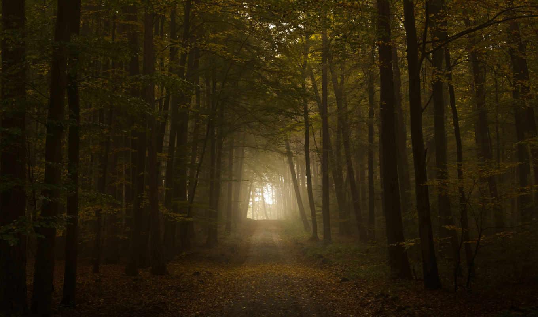 дорога, свет, осень, листва, тунель, лес, деревья,
