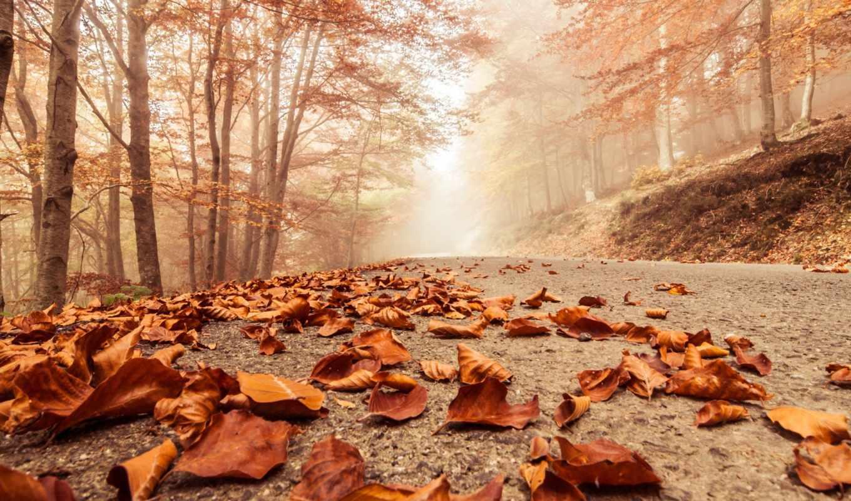 осень, года, времена, туман, природа, листья,
