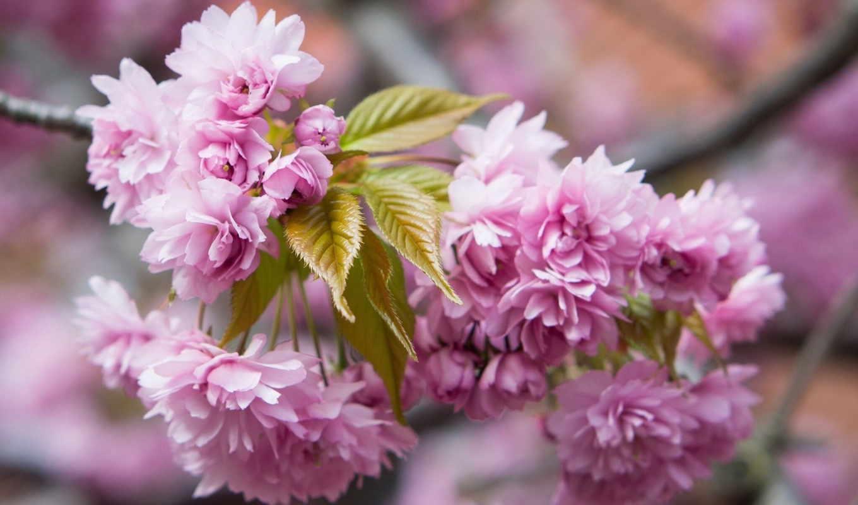 цветы, весна, весны, марта, весенние, цветение, дыханием,