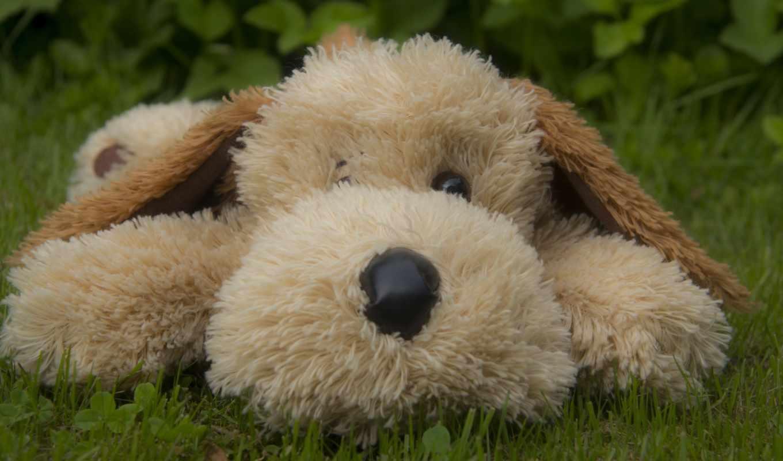 медведь, собака, игрушки, мишки, плюшевый, красивые, teddy, цветы, любой, toy,