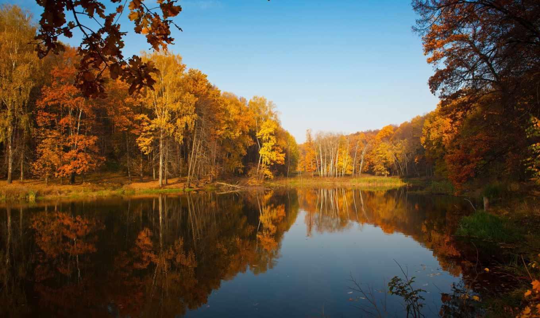 осень, trees, лес, озеро, природа, пруд,