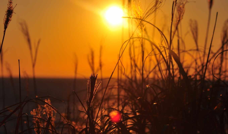 природа, sun, трава, landscape, фотографий, серьги, архиве, rays,