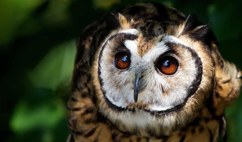 сова, you, animal, fantasy, eyes, birds, winter, glaza, art,