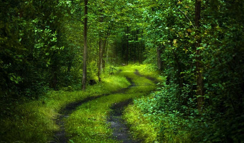 дорога, лес, деревья, лесу, листва, свежесть,
