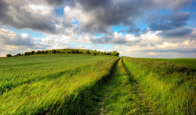 поле, трава, дорога, травы, зелёный, plain, небо,