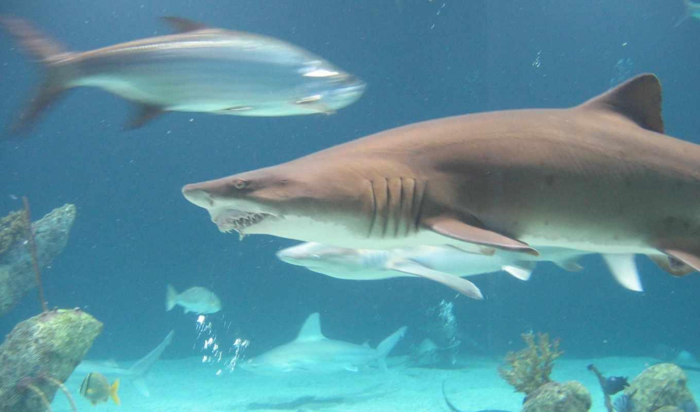 los, del, мин, марина, fauna, tiburones,