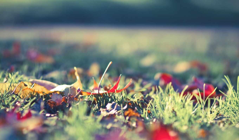 цветы, весна, fotografirovat, example