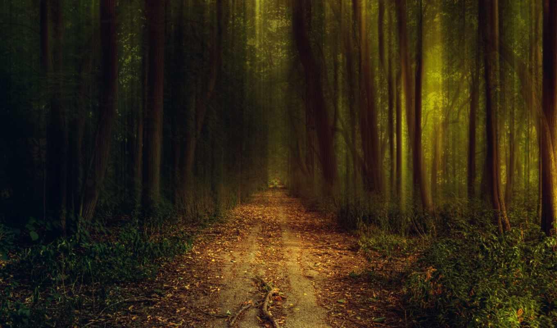 природа, постер, леса,