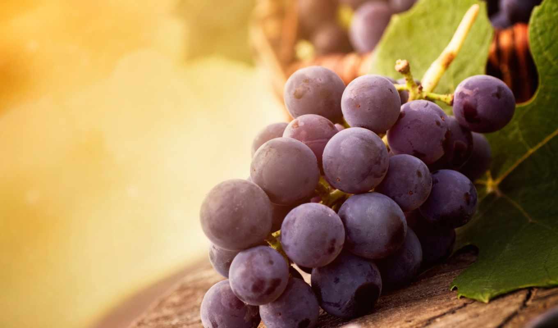 виноград, eда, svet, листья,
