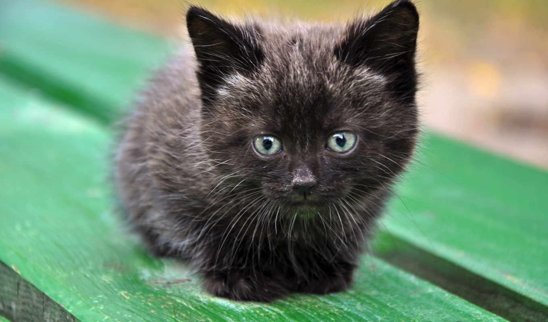 ми, котята, против, битва, мире, котят, nefrina, но,