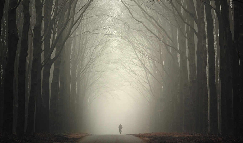 осень, дорога, лес, человек, туман, galaxy, note, samsung,