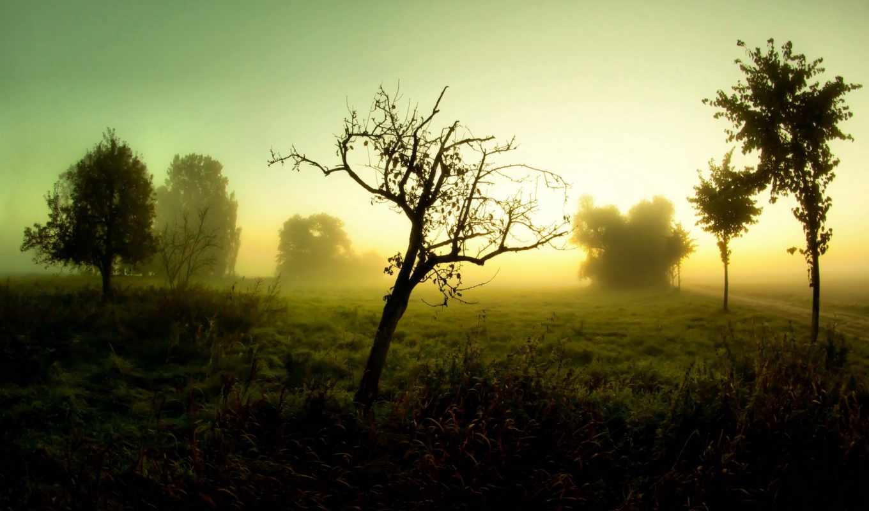 туман, дорога, пейзаж, деревья, утро,