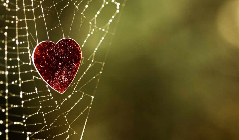 роса, паутина, сердце, фокус
