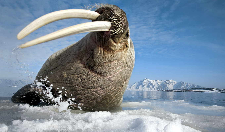 zhivotnye, животных, антарктиды, вечной, самые, интересных, зооклубе,
