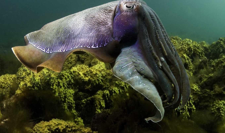 море, под, водой, подводный, мир,