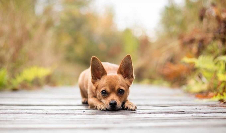 собака, животные, красивые, собаки, собак, очень, взгляд,