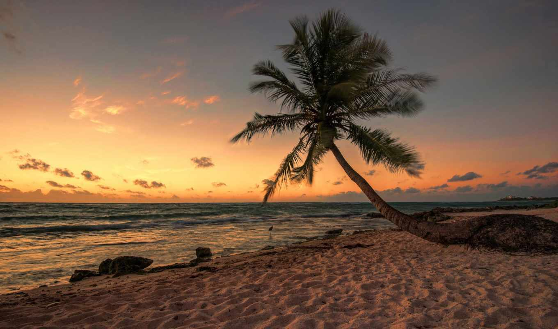 tropical, desktop, nature, best, beach, free, download,