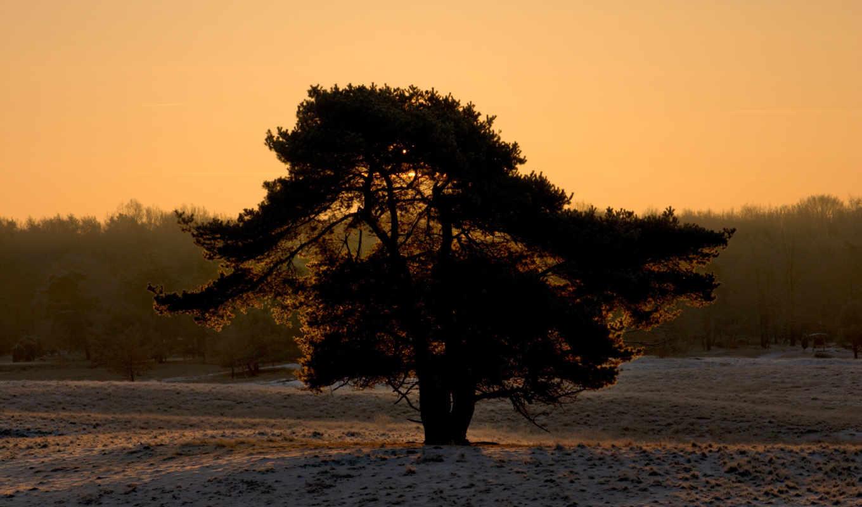 дерево, снег, зима, силуэт, hd,
