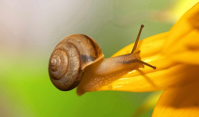 بيدروسا, snail,