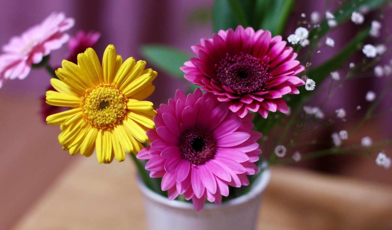 герберы, cvety, рисунки,