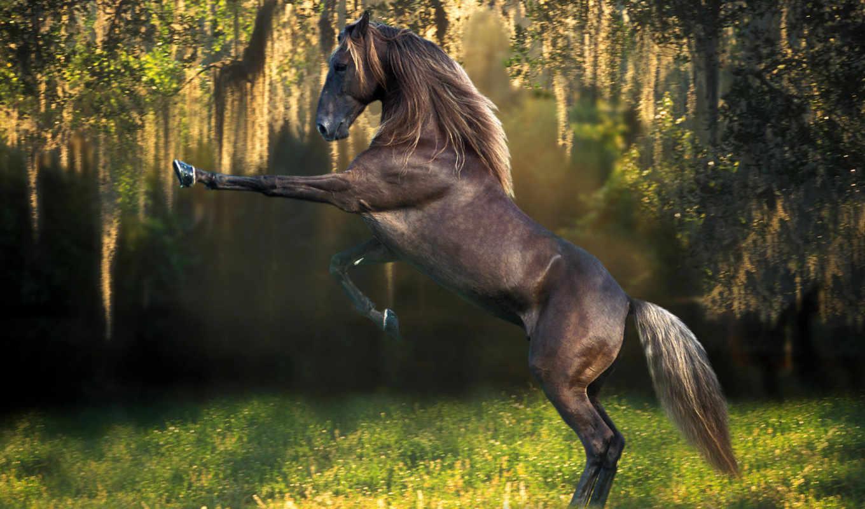 лошадь, кони, лошади, best, пароль, everything, записей, лошадей, красивый,