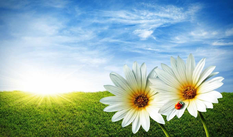 весна, flowers, трава, природа, daisy,