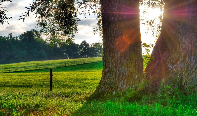 роса, трава, природа, sun, утро, капли, дерево, свет,