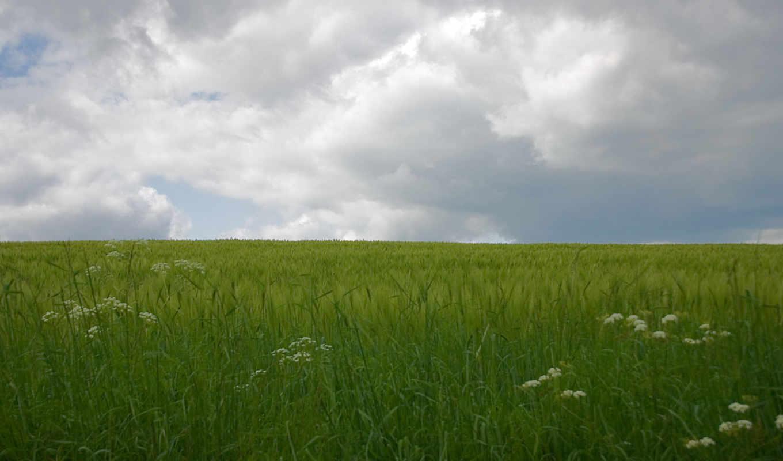 поле, дождь, облака, зеленый,