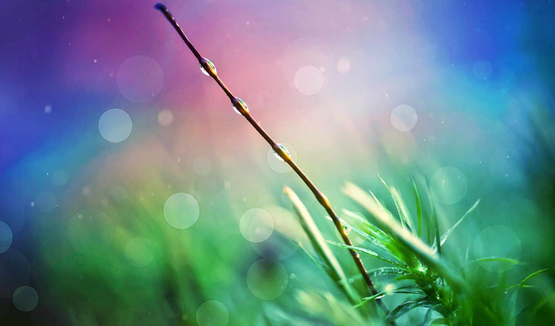 качестве, макро, full, прекрасные, травкой, поразительная, любой, definition, трава,