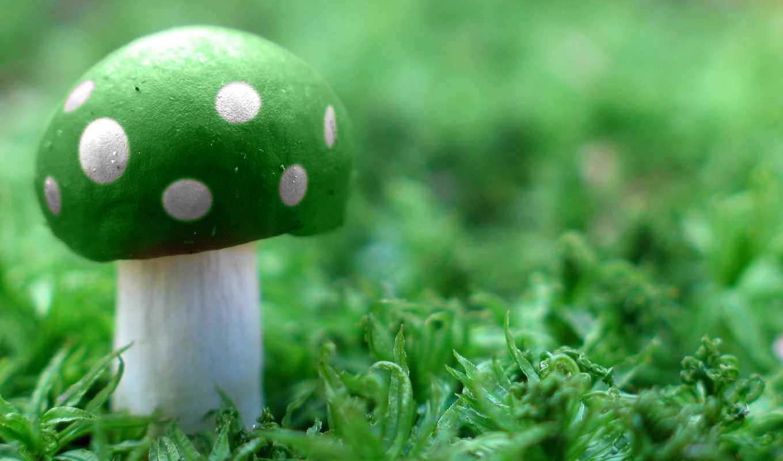 грибы, мухомор, mushroom,