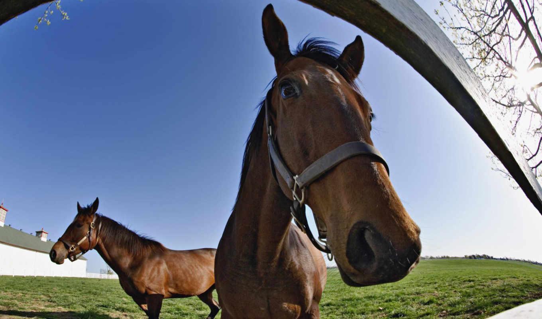 об, лошадей, веселые, демки, смешные, демотиваторы, прикольные, demy, надписями, приколы,