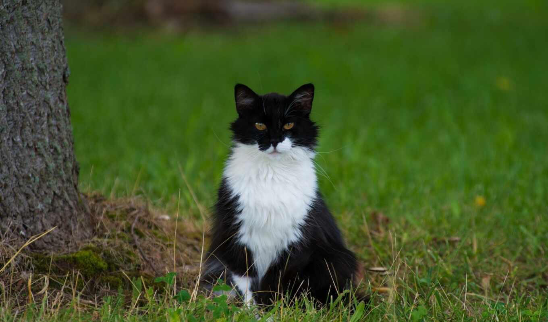 white, кот, природа, фотообои, oir